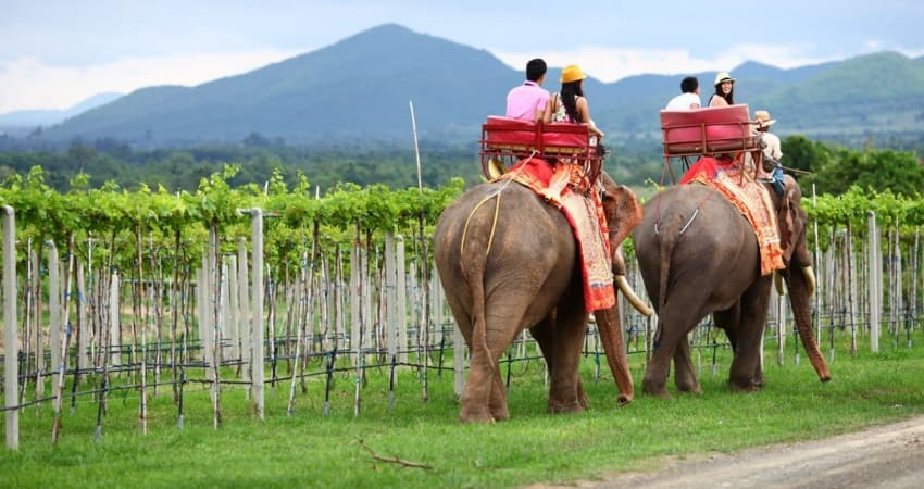 Tasting New Latitude Wines in Hua Hin