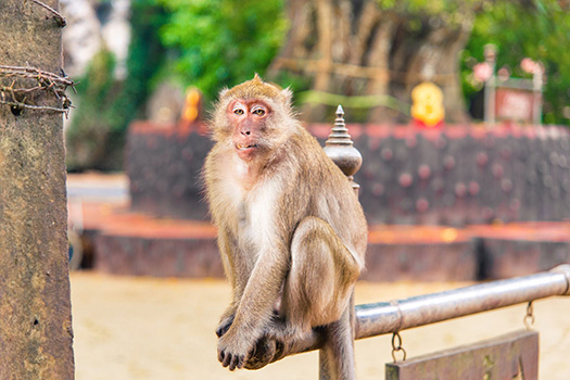 Monkey Mountain and Tham Suwan Kuha Temple Tour